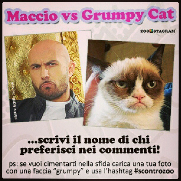 Maccio vs Grumpy Cat